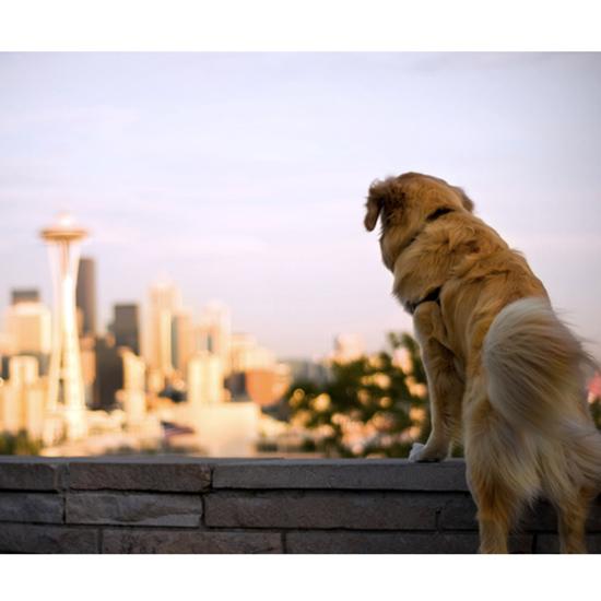 Dog-Friendly Cities Slideshow