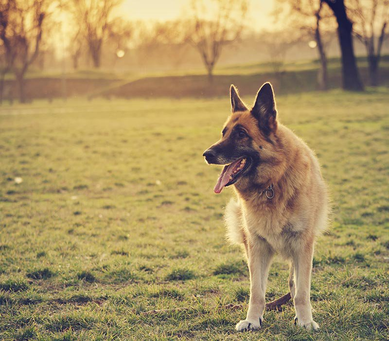 25 Tips For A Happy Dog