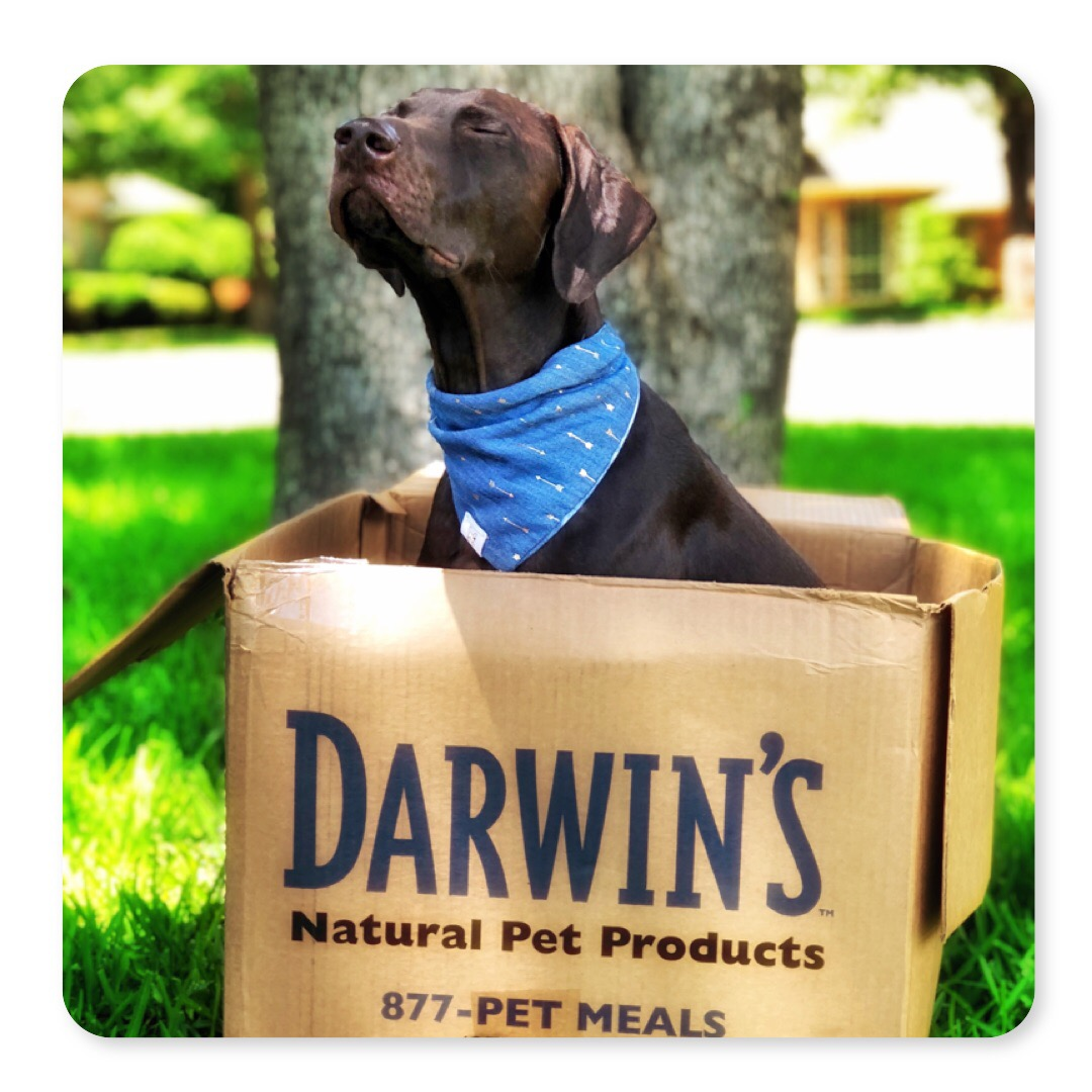 Darwin's Natural Pet Food
